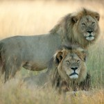 Cecil and Jericho